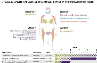 Effects of Estrogen
